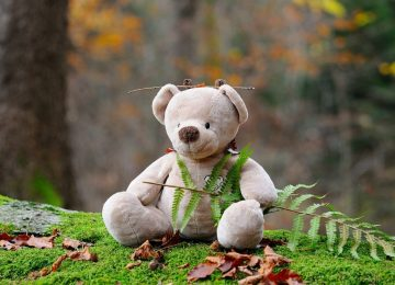 teddy-bear-524251_1280