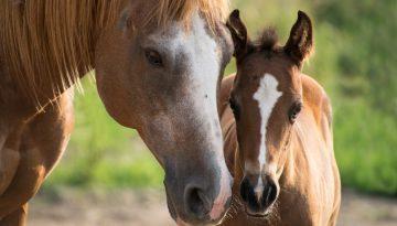 foal-3467629_1280
